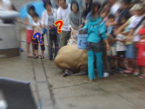 20070709-11.jpg